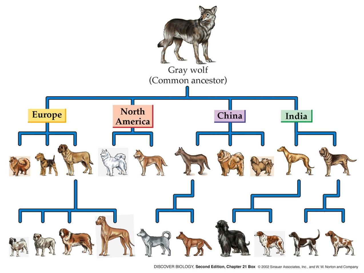 www.csus.edu_indiv_l_loom_wk_2015_dogs.jpg