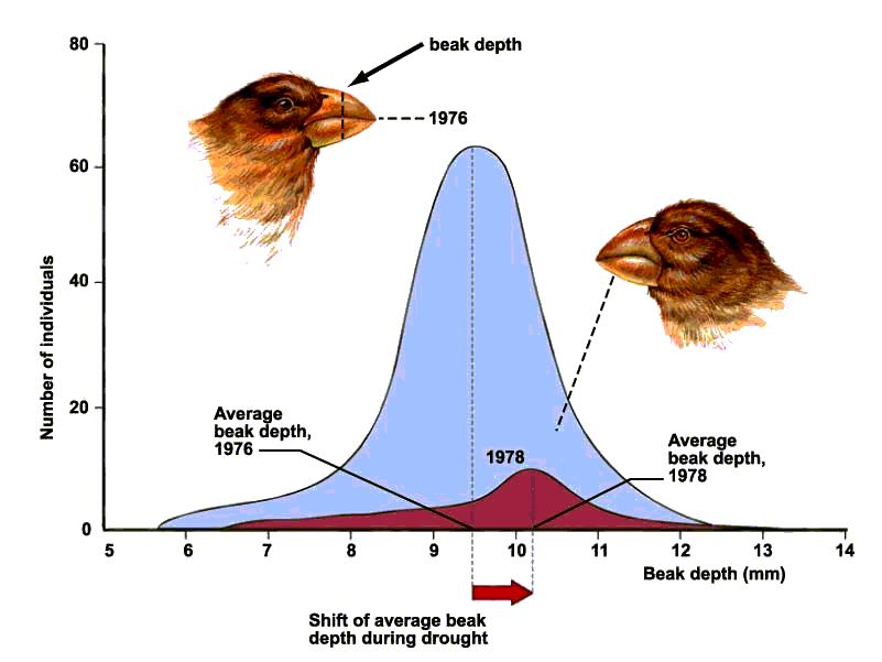 Natural Selection Finches Lab