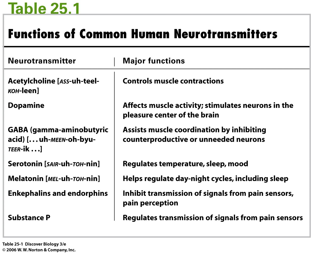 Different Neurotransmitters