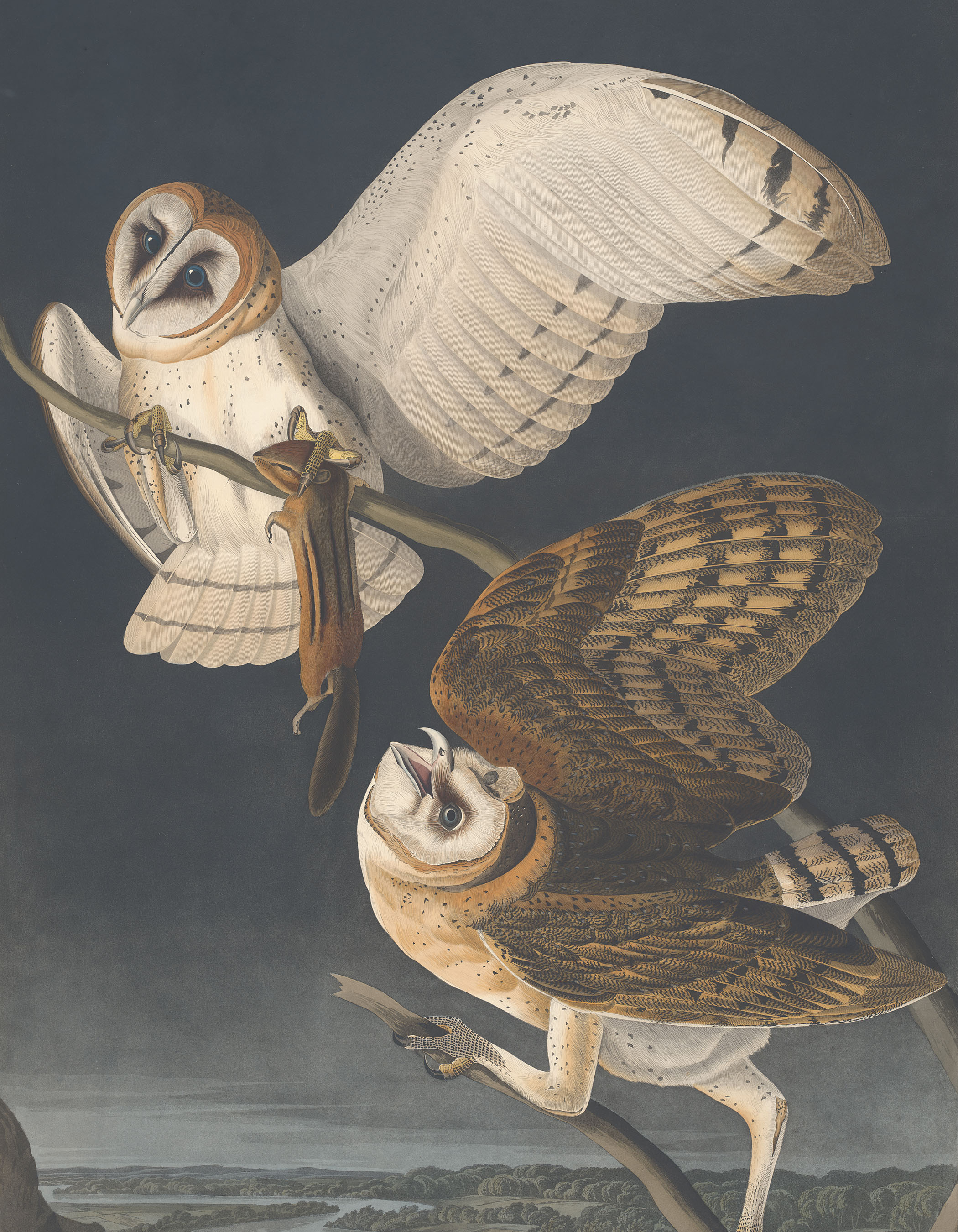 An image from Audobon's The Birds of America (1827-38)