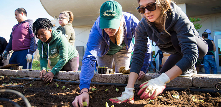 Students in Professor Kelly Thompson's Food Production and Sustainability class are cultivating a real-world education.