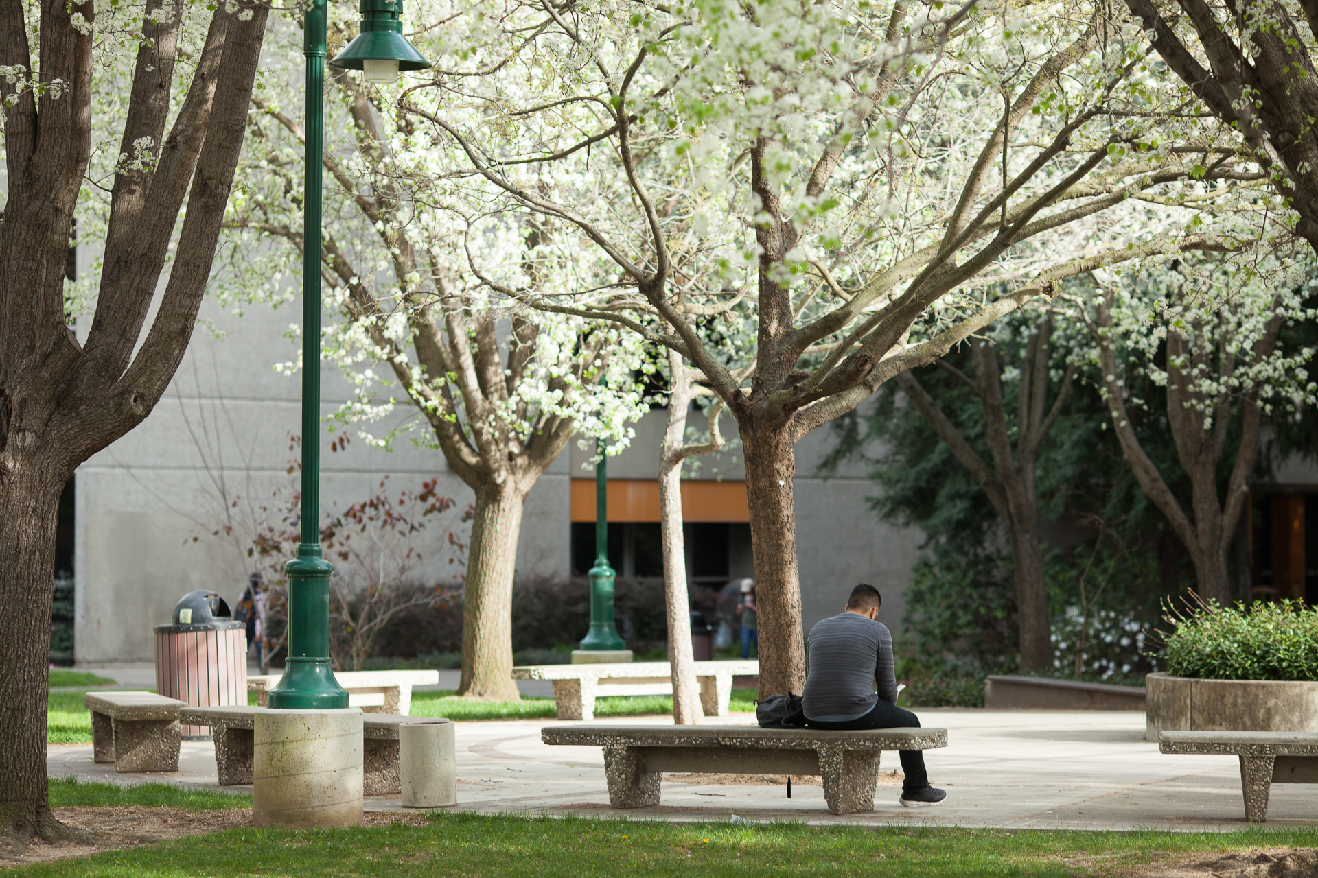 A man sits on a bench on the Sac State campus, surrounded by trees